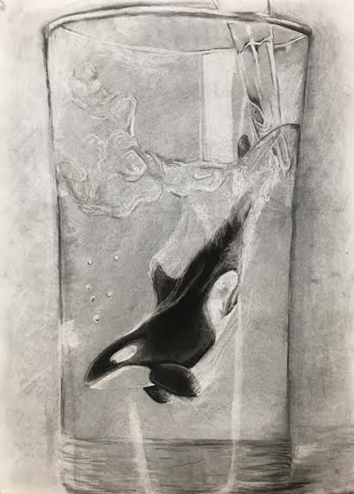 Charcoal drawing on an orca swimming in a glass of water